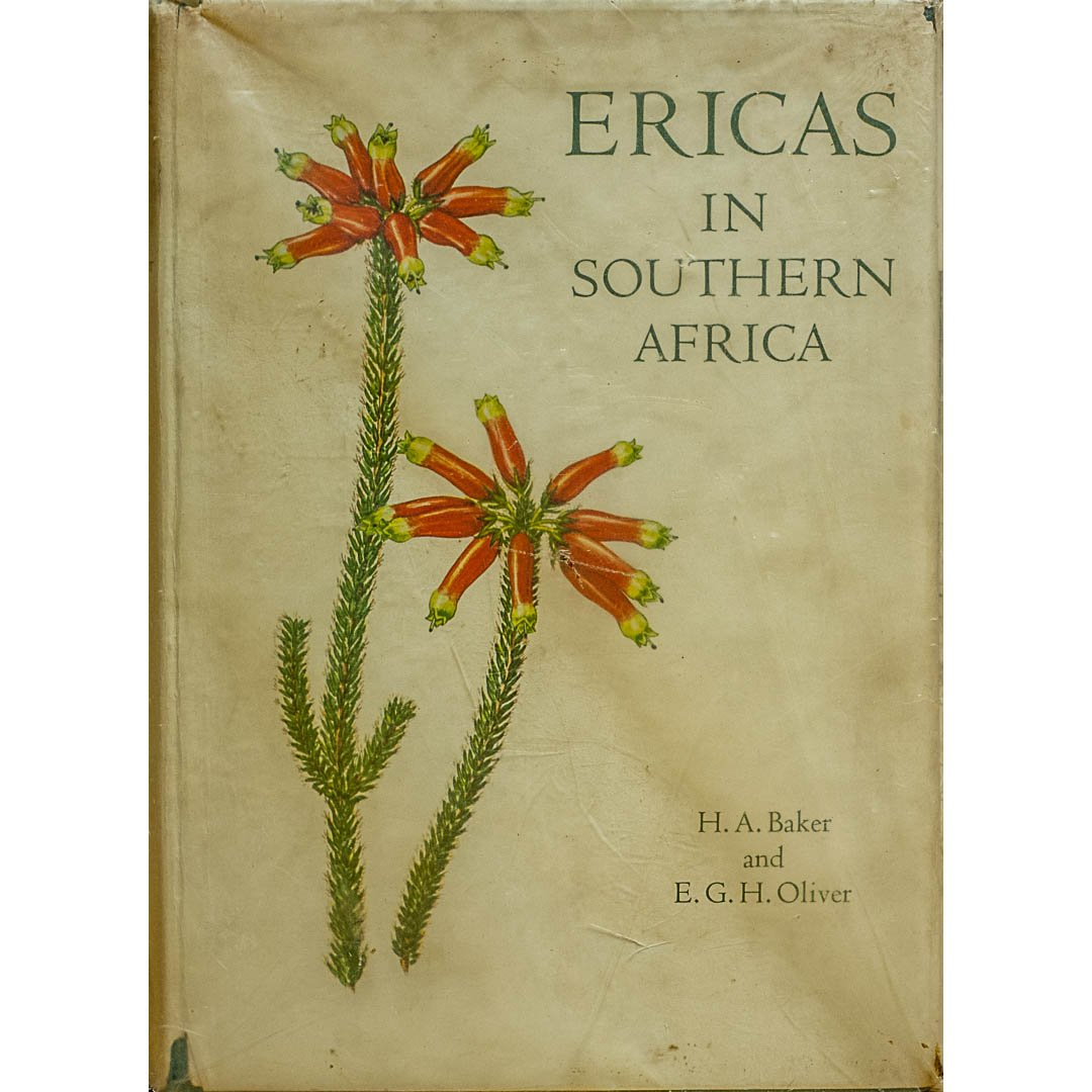 Ericas in South Africa