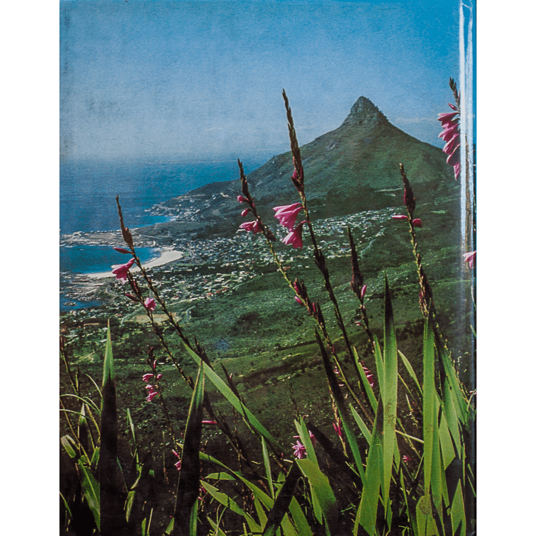 Wild flowers of table Mountain b