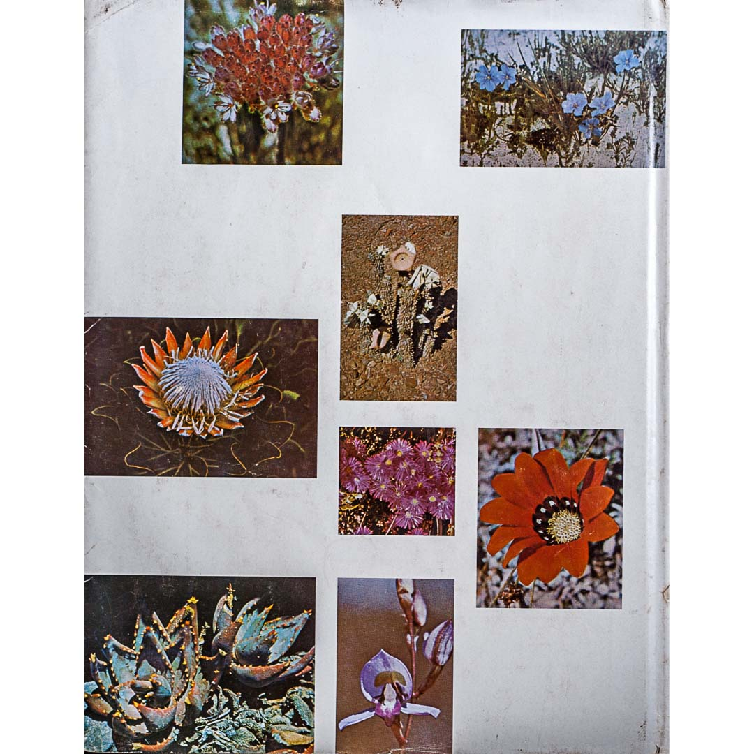 families of flowering plants of southern africa b